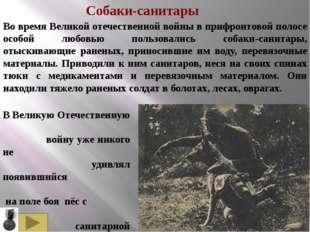 Это героическое животное, не жалея себя, помогало польским солдатам во время