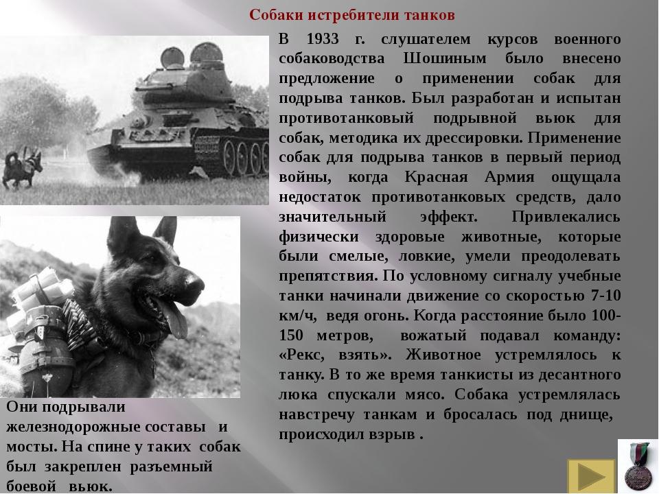 Белорусские и русские партизаны приручили и использовали для рейдов по тылам...