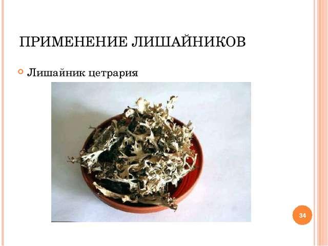* ПРИМЕНЕНИЕ ЛИШАЙНИКОВ Лишайник цетрария