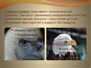 У орлов и грифов глаза имеют телескопическое строение. Они могут увеличивать