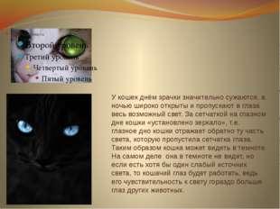У кошек днём зрачки значительно сужаются, а ночью широко открыты и пропускают
