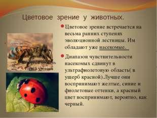 Цветовое зрение у животных. Цветовое зрение встречается на весьма ранних ступ