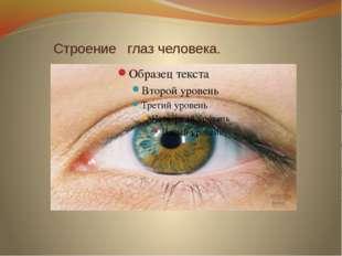 Строение глаз человека.