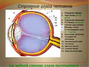 Строение глаза человека 1 2 3 4 5 6 7 8 9 10 11 12 13 14 Передняя камера Хру