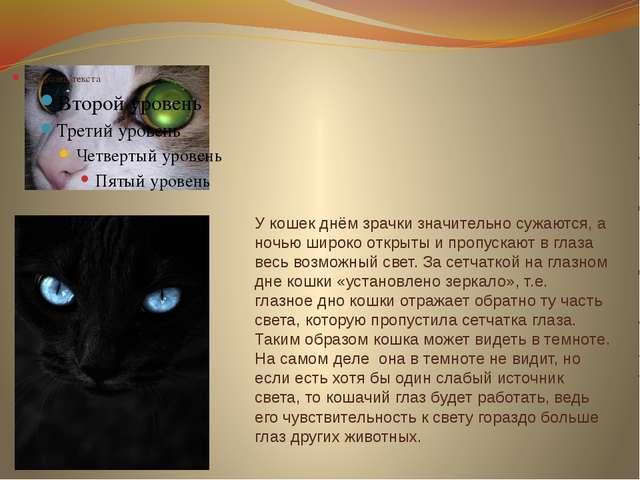 У кошек днём зрачки значительно сужаются, а ночью широко открыты и пропускают...