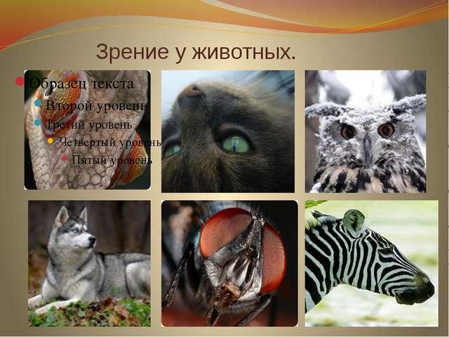 Зрение у животных.