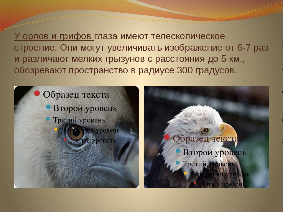 У орлов и грифов глаза имеют телескопическое строение. Они могут увеличивать...