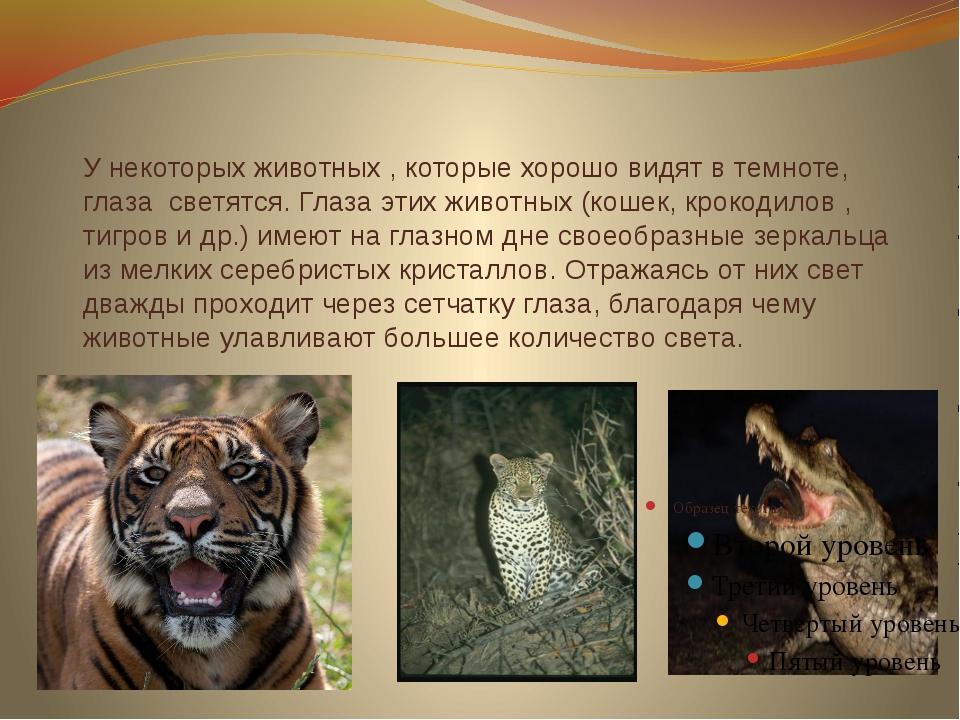 У некоторых животных , которые хорошо видят в темноте, глаза светятся. Глаза...