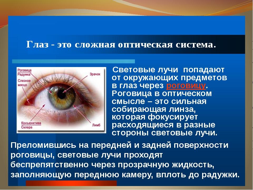 Урок глаз презентация