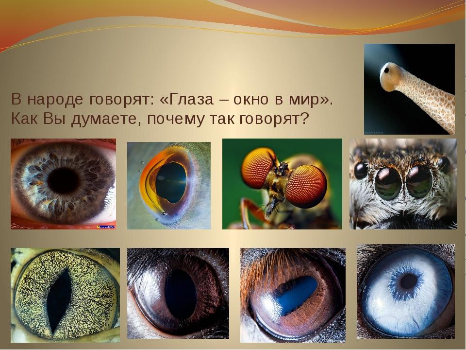 В народе говорят: «Глаза – окно в мир». Как Вы думаете, почему так говорят?