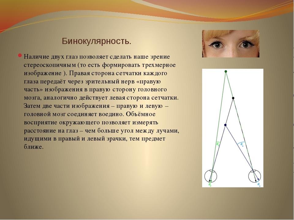 Бинокулярность. Наличие двух глаз позволяет сделать наше зрение стереоскопич...