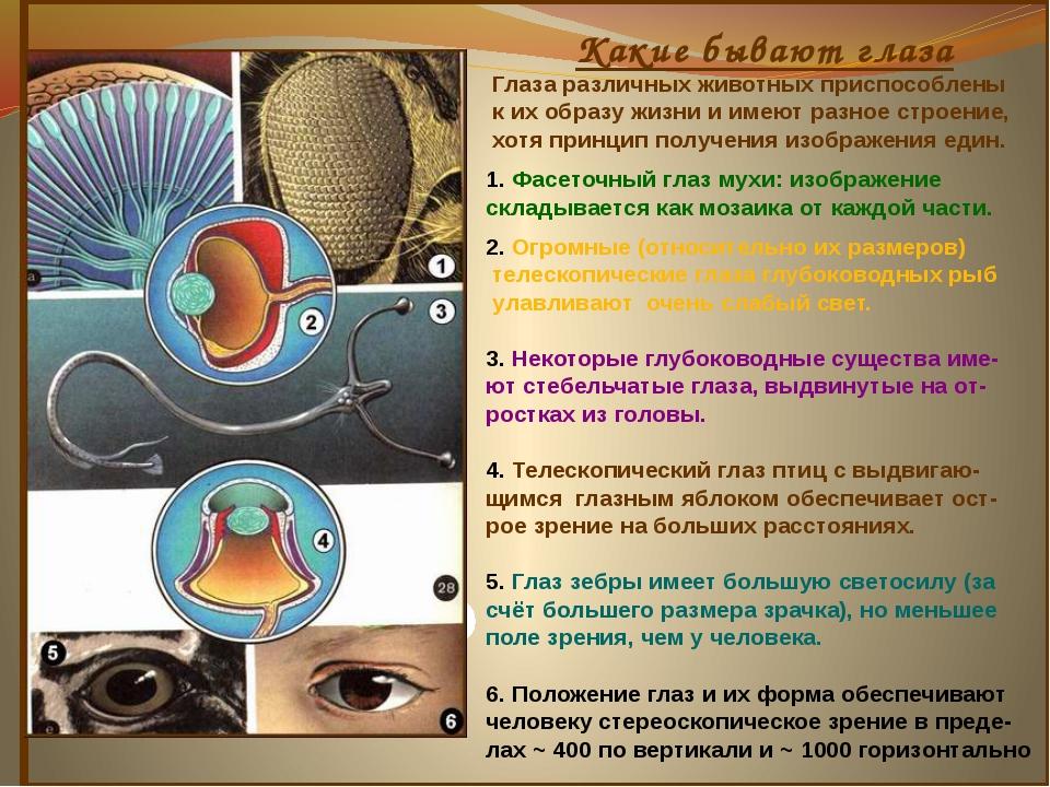 Какие бывают глаза Глаза различных животных приспособлены к их образу жизни...