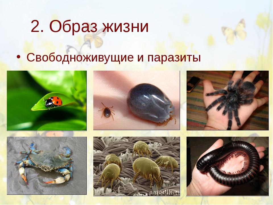 2. Образ жизни Свободноживущие и паразиты