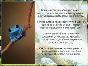 Большинство земноводных имеют вытянутое или лягушковидное туловище с двумя па