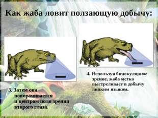 Как жаба ловит ползающую добычу: 3. Затем она поворачивается ицентром поля з