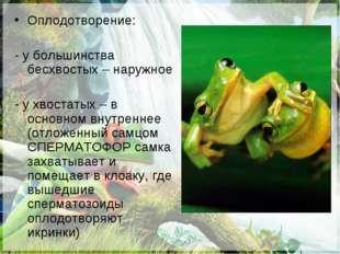 Оплодотворение: - у большинства бесхвостых – наружное - у хвостатых – в основ