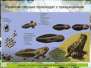 Развитие лягушки происходит с превращением. РАЗВИТИЕ Развитие лягушки происхо