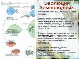 Ихтиостегии жили 370–350 млн лет назад и вымерли. Древняя длиннохвостая групп