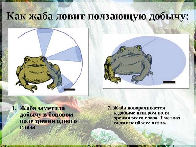 Как жаба ловит ползающую добычу: Жаба заметила добычу вбоковом поле зрения о...