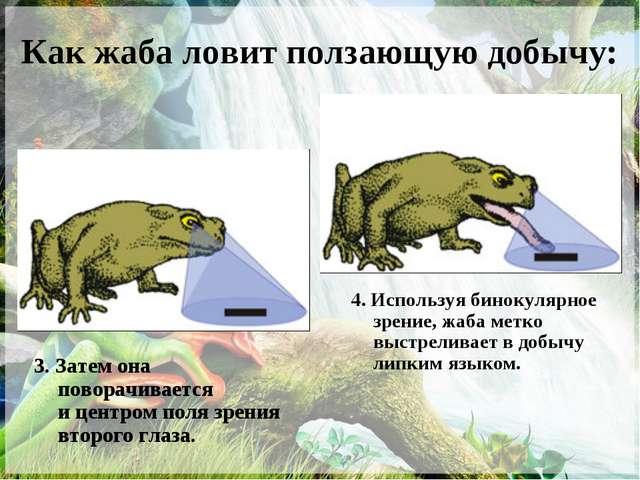 Как жаба ловит ползающую добычу: 3. Затем она поворачивается ицентром поля з...
