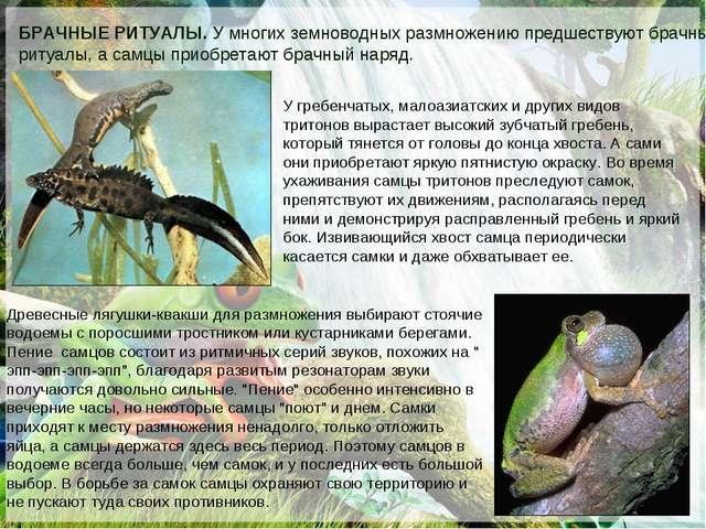 БРАЧНЫЕ РИТУАЛЫ. У многих земноводных размножению предшествуют брачные ритуал...
