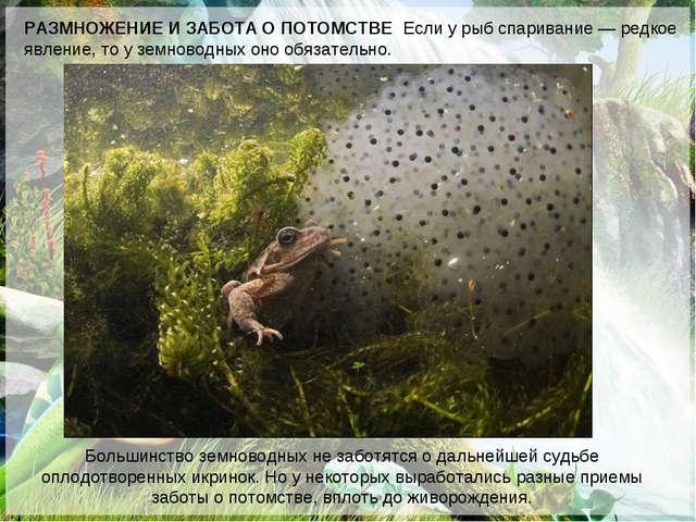 РАЗМНОЖЕНИЕ И ЗАБОТА О ПОТОМСТВЕ Если у рыб спаривание— редкое явление, то у...