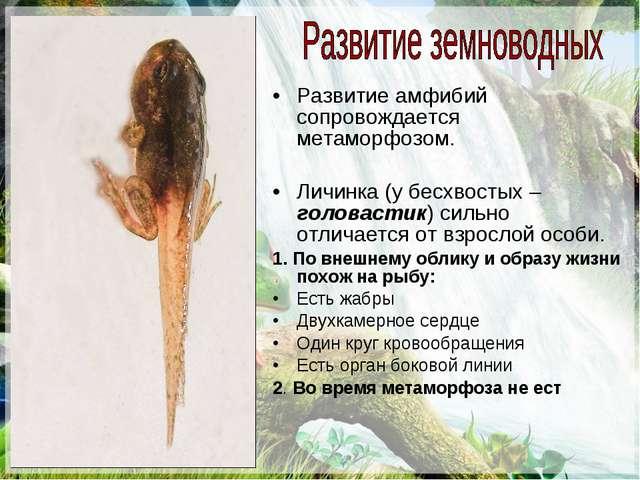 Развитие амфибий сопровождается метаморфозом. Личинка (у бесхвостых – головас...