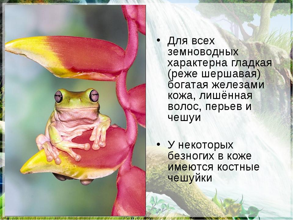 Для всех земноводных характерна гладкая (реже шершавая) богатая железами кожа...