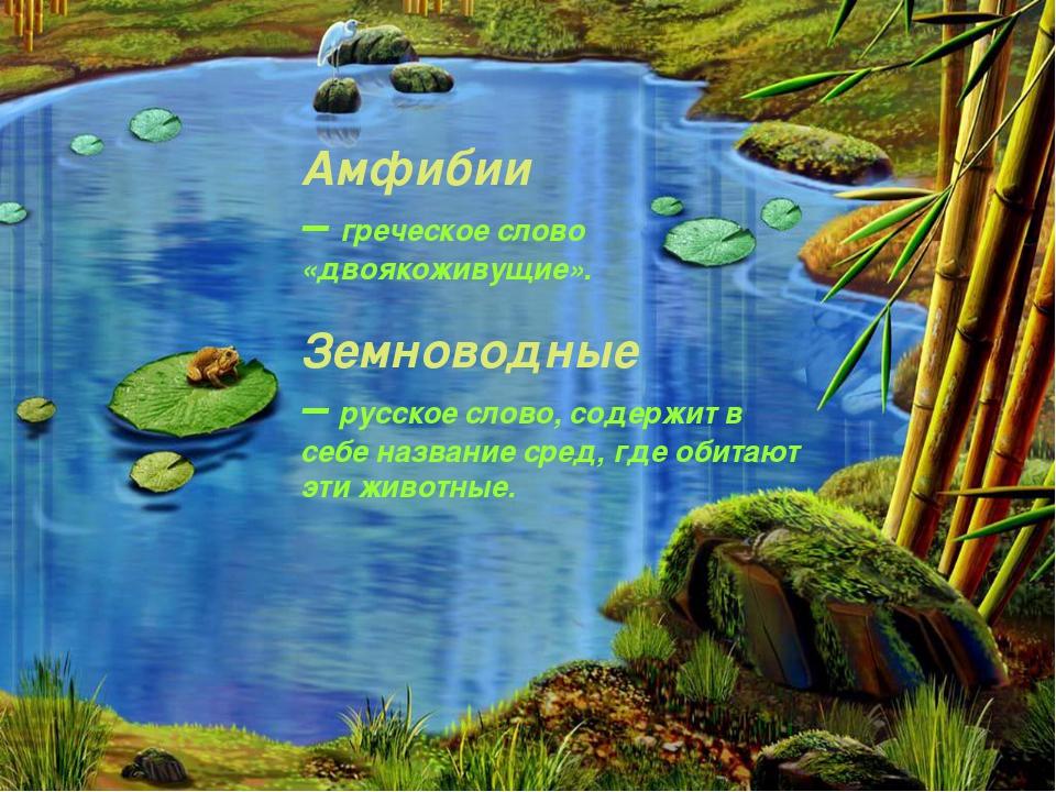 Амфибии – греческое слово «двоякоживущие». Земноводные – русское слово, содер...