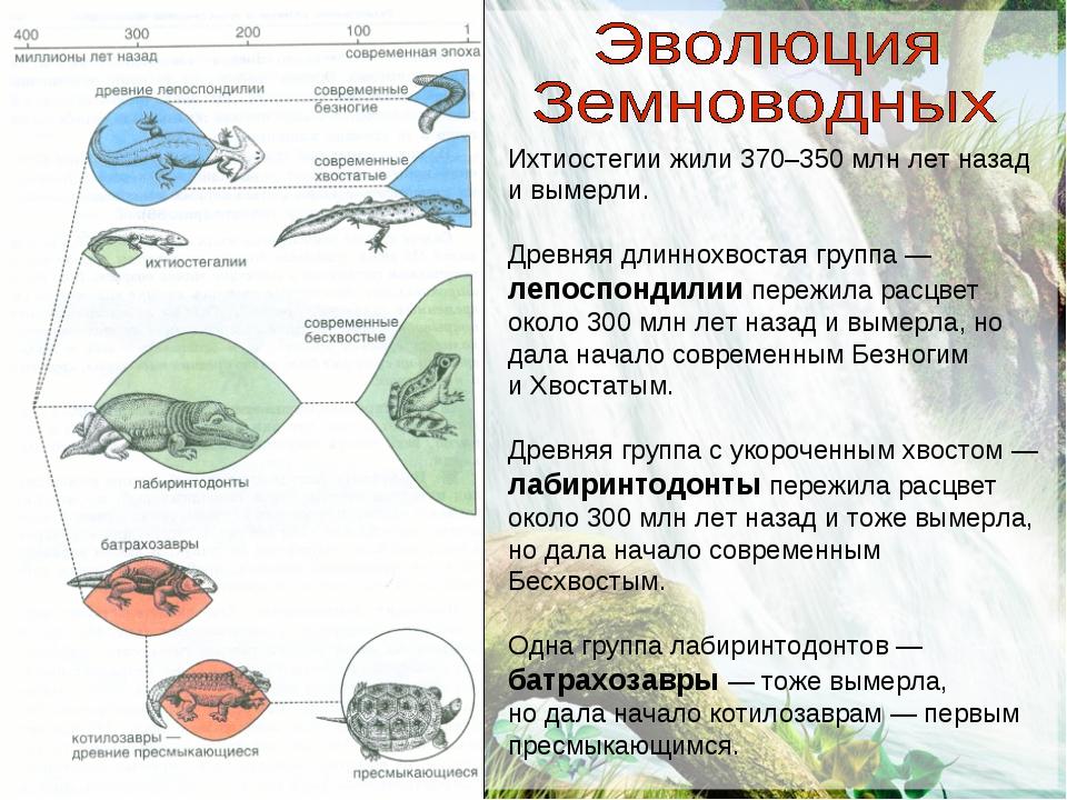 Ихтиостегии жили 370–350 млн лет назад и вымерли. Древняя длиннохвостая групп...