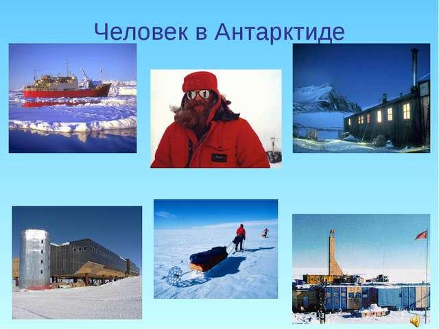 Человек в Антарктиде