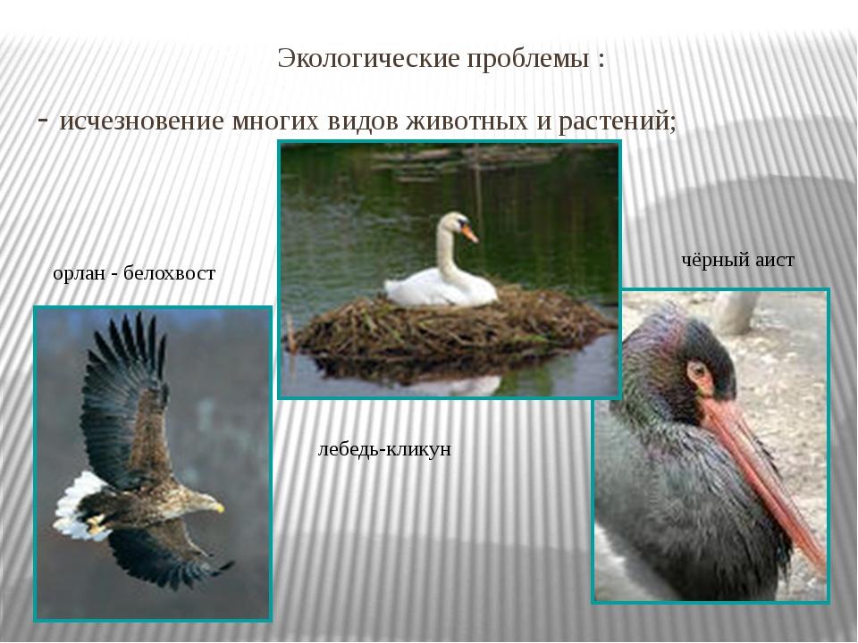 Экологические проблемы : - исчезновение многих видов животных и растений; ле...