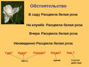 Обстоятельство Расцвела белая роза Расцвела белая роза Расцвела белая роза Ра