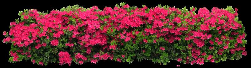 Сад, цветы и деревья на прозрачном фоне