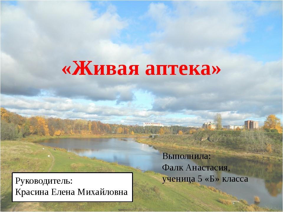 «Живая аптека» Выполнила: Фалк Анастасия, ученица 5 «Б» класса Руководитель:...
