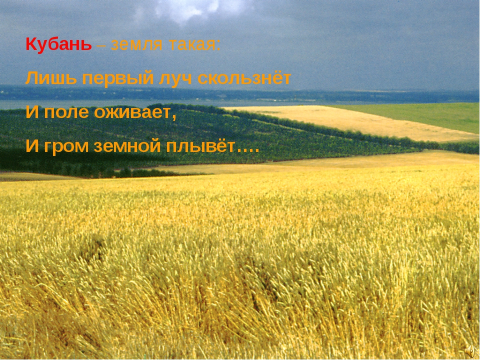 Кубань – земля такая: Лишь первый луч скользнёт И поле оживает, И гром земной...