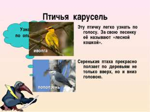 Птичья карусель Эту птичку легко узнать по голосу. За свою песенку её называю