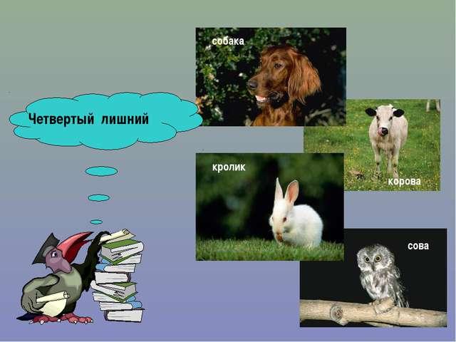 Четвертый лишний сова кролик собака корова