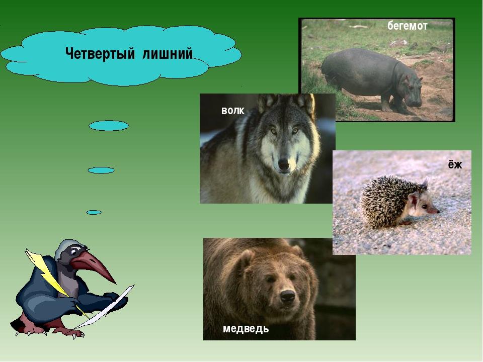 Четвертый лишний бегемот волк медведь ёж