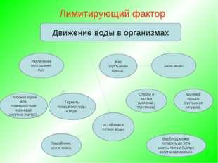 Лимитирующий фактор Глубокие корни или поверхностная корневая система (кактус).
