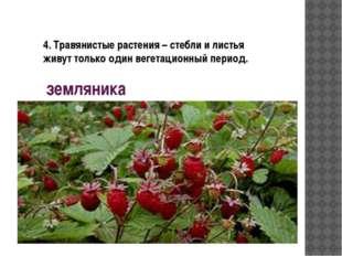 земляника 4. Травянистые растения – стебли и листья живут только один вегетац