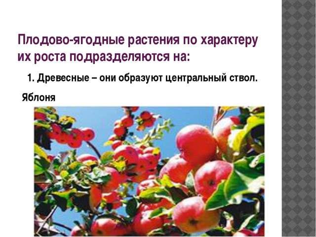 Плодово-ягодные растения по характеру их роста подразделяются на: 1. Древесны...