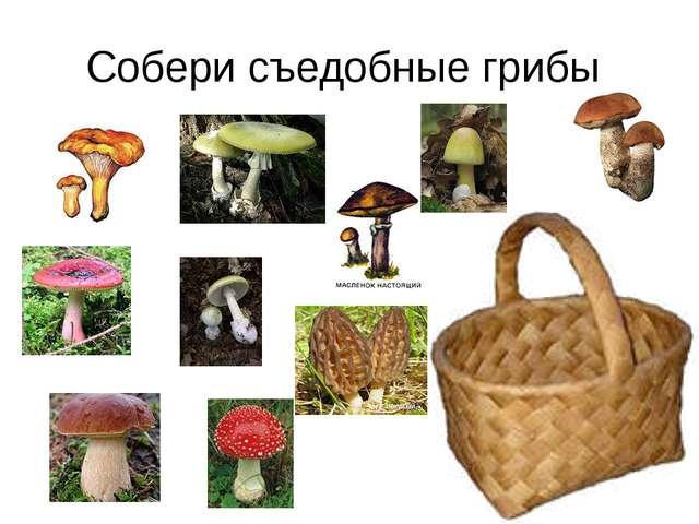Собери съедобные грибы