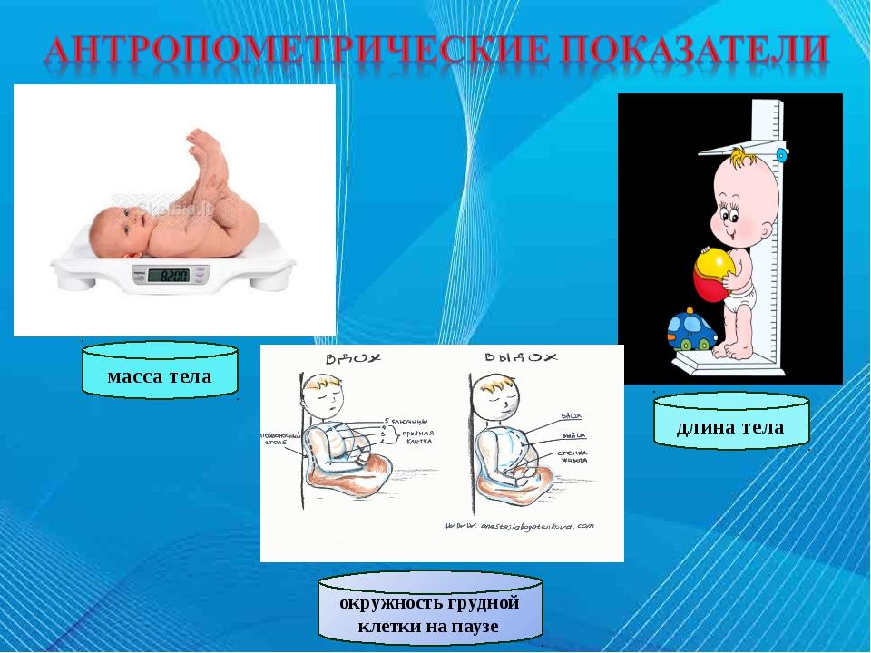 масса тела длина тела окружность грудной клетки на паузе