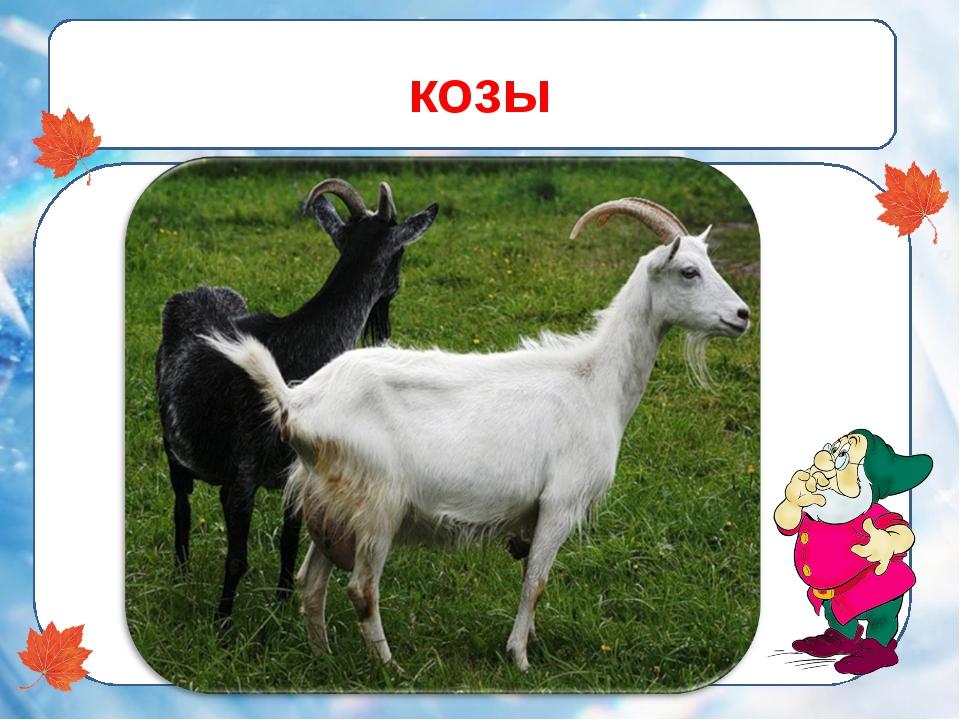 козы -