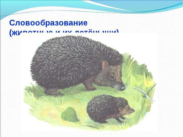 Словообразование (животные и их детёныши)