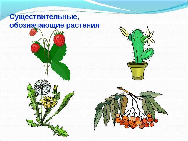 Существительные, обозначающие растения