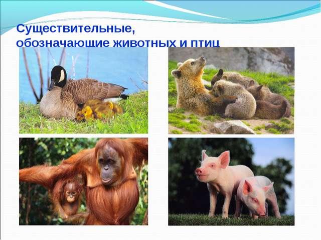 Существительные, обозначающие животных и птиц