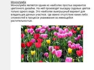 Моноклумба Моноклумба является одним из наиболее простых вариантов цветочного