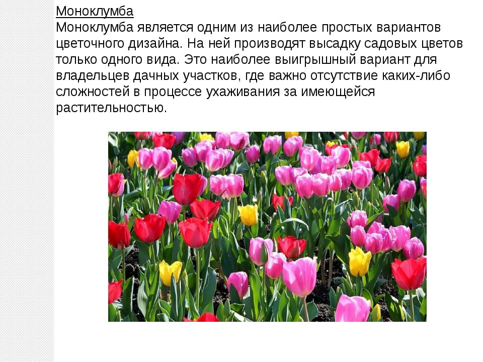 Моноклумба Моноклумба является одним из наиболее простых вариантов цветочного...